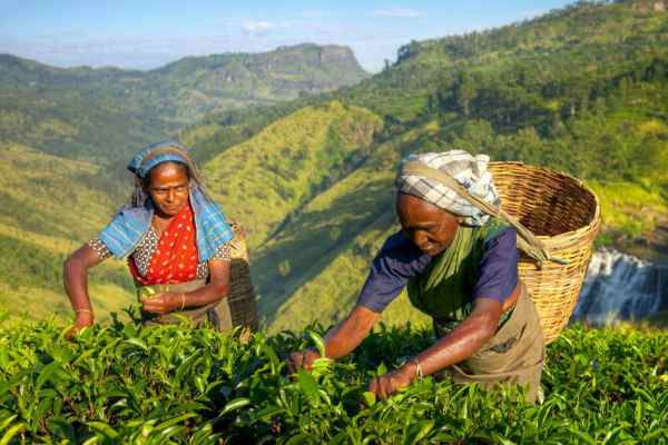 How to start tea business in India