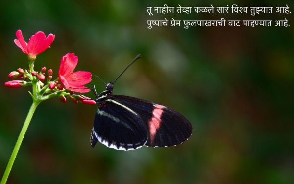 फुलपाखरू कविता - Fulpakharu Marathi Kavita - Phulpakharu Lyrics - Marathi Poem for Kids
