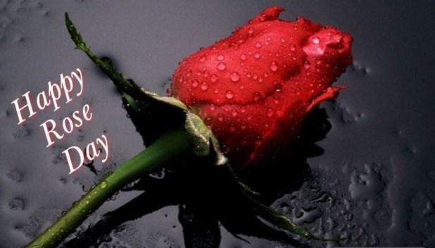 7 february rose day image