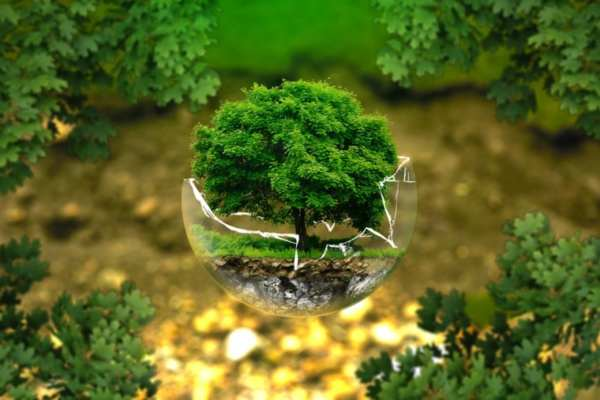 विश्व पर्यावरण दिवस शायरी