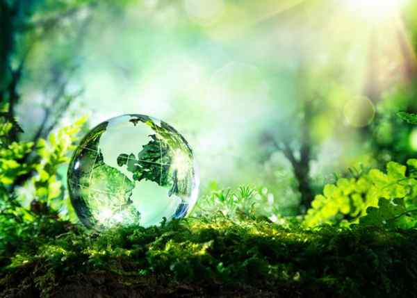 5 June World Environment Day Essay in Hindi