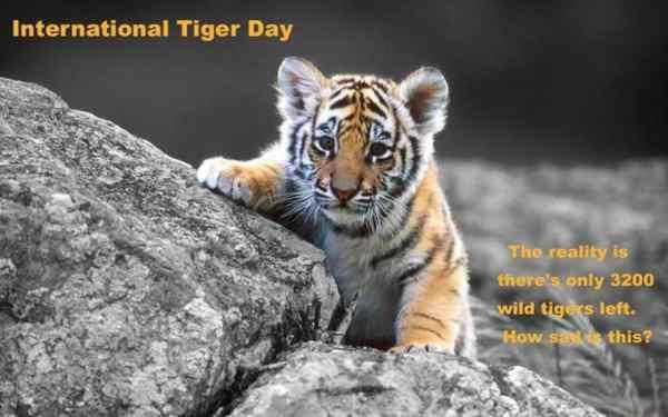 International Tiger Day Slogan