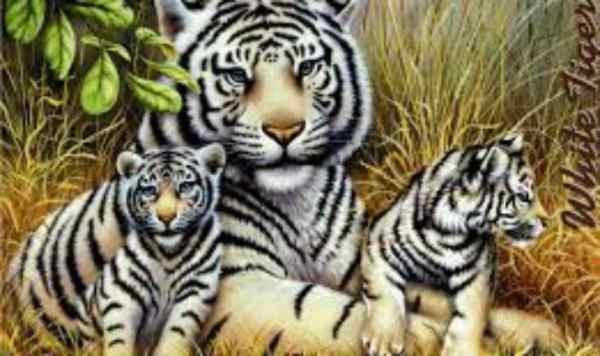 International Tiger day speech in Hindi