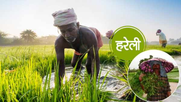 Poem on Harela in Hindi