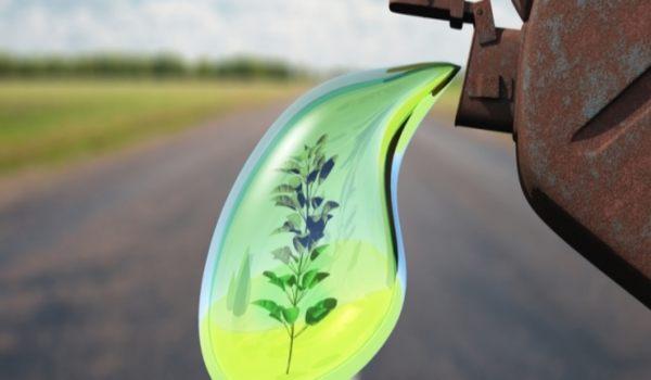 International Biodiesel Day Essay in Hindi