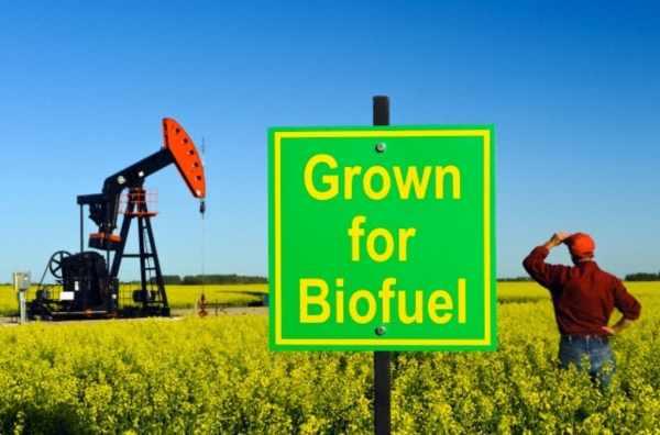 Slogans For International Biodiesel Day