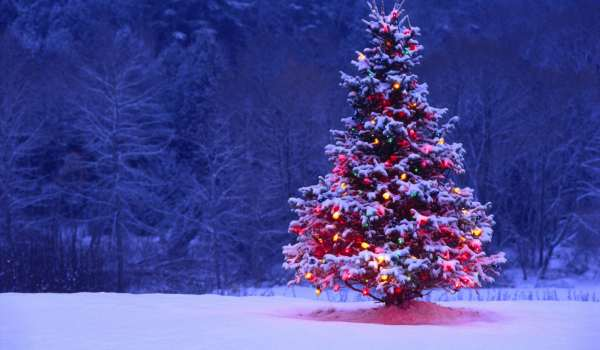 Christmas tree hd images