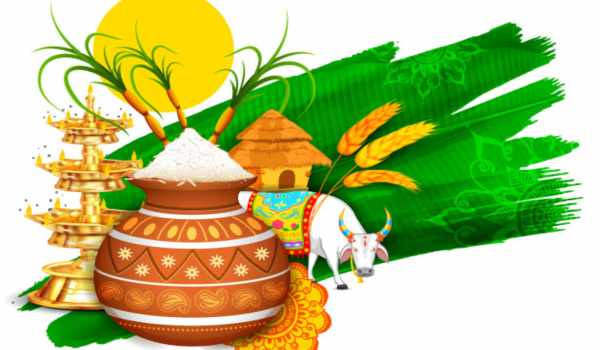 Pongal festival in hindi