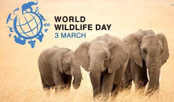 International Wildlife Day Essay hindi