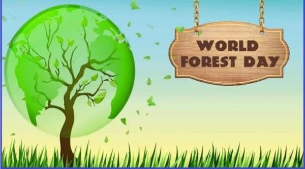 International forestry Day Essay