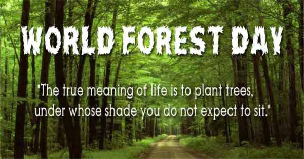 Quotes for World forestry Day