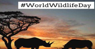 World Wildlife Day Quotes