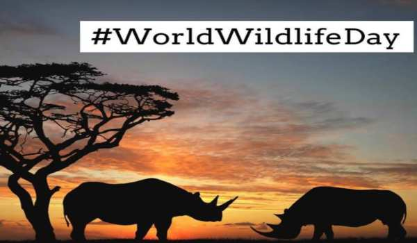 World Wildlife Day Quotes