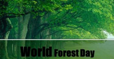 World forestry Day Essay