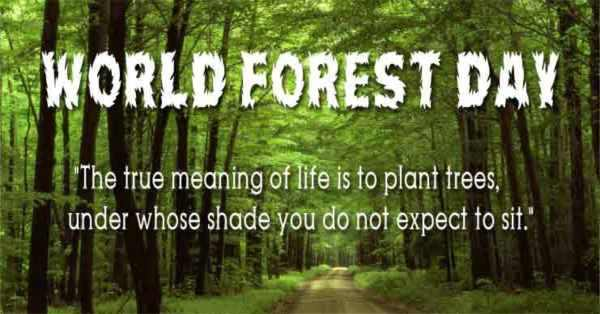 World forestry Day Photos