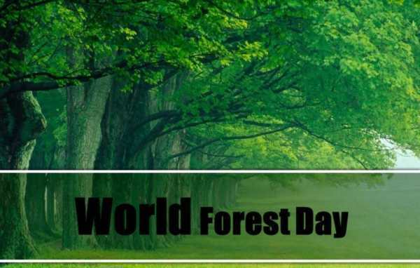 World forestry day Pics for WhatsApp
