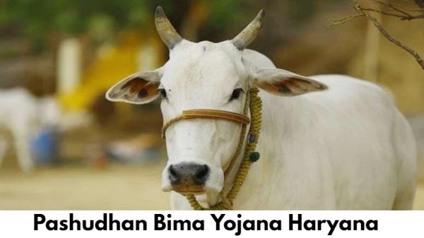 Pashudhan Bima Yojana Haryana